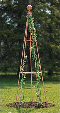 "Copper Pyramid - will take on a verdigris patina over time. With its large ball finial it stands over 6' high and 26"" in diameter at the base. Five legs provide a stable and secure support. Makes an outstanding display when used with climbing roses."