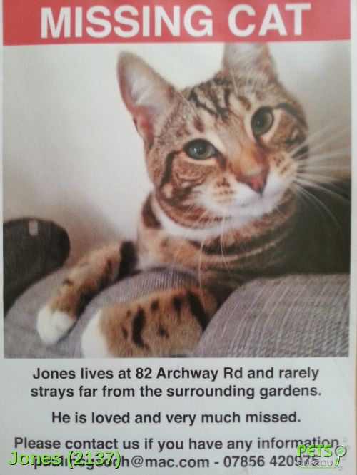 Please help us find Jones the Cat missing in the N19 area. For more details click http://j.mp/1rFy9nM
