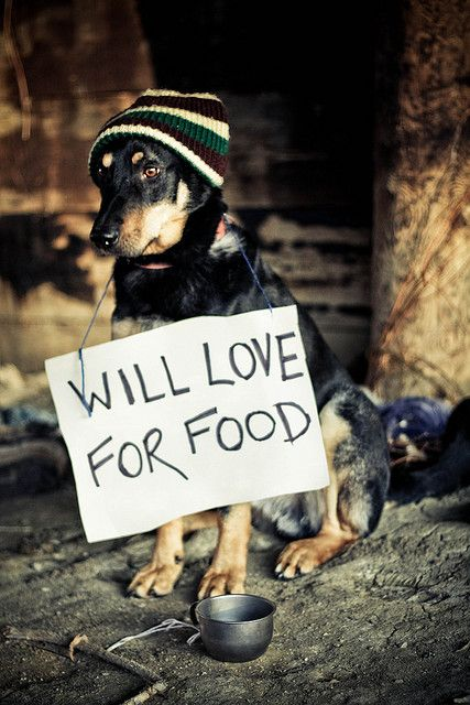 Yeah, all cats and dogs do not live a pampered life. Help stop the abuse and cruelty many pets have to endure.