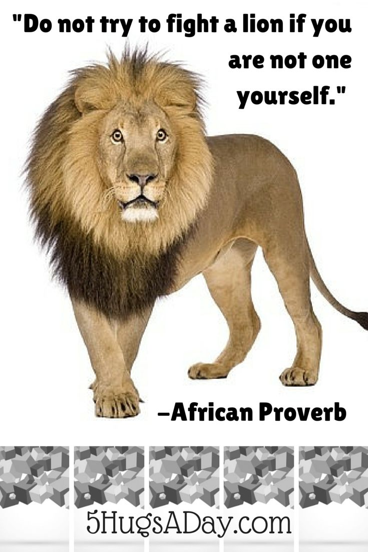 """""""Do not try to fight a lion if you are not one yourself."""" -African Proverb via @5hugsaday 