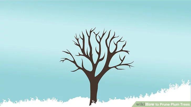 Image titled Prune Plum Trees Step 1
