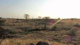 Silenzio! L'alba nella savana. Guardate e provate ad immaginare. Non riuscirete a comprendere la meraviglia ma ad immaginarla un pò forse si.  È pura natura, è pura vita.