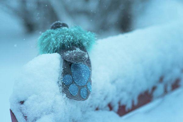 Mariia Kalinichenko Art Print featuring the photograph Forgotten Blue Mittens by Mariia Kalinichenko #MariiaKalinichenkoFineArtPhotography #Winter #Mittens #ArtForPrint #FineArtPhotography