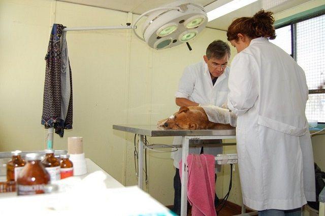 Se realizará una nueva jornada masiva de esterilización canina y felina http://www.ambitosur.com.ar/se-realizara-una-nueva-jornada-masiva-de-esterilizacion-canina-y-felina/ El próximo sábado 15 de noviembre en instalaciones del Predio Ferial, a partir de las 09:00 se realizará una nueva jornada de esterilización canina y felina. En la oportunidad, se intervendrán aproximadamente 80 mascotas, mediante los veterinarios que atenderán en los dos tráilers que estarán a d