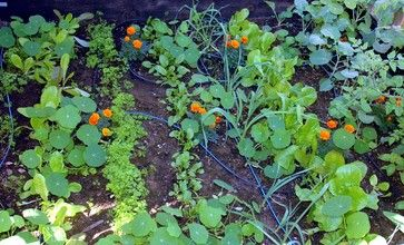 Garden BFFs? Why Your Vegetables Are Begging for Companion Plants