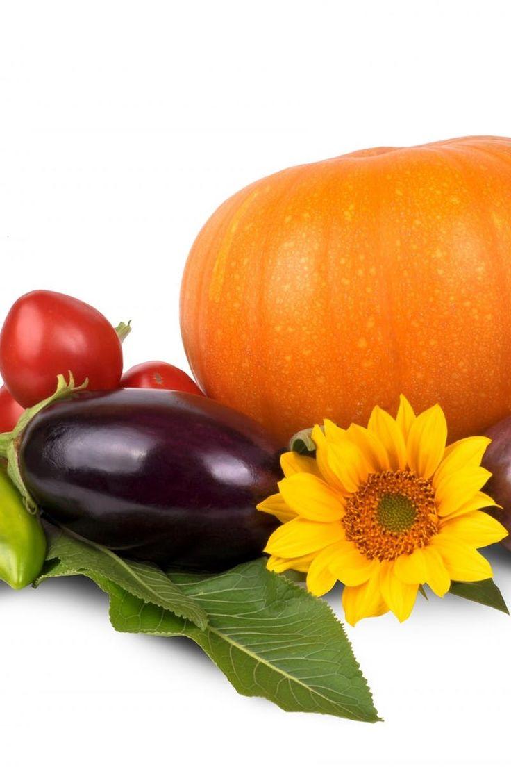 Orange Pumpking Purple Eggplant and Sunflower