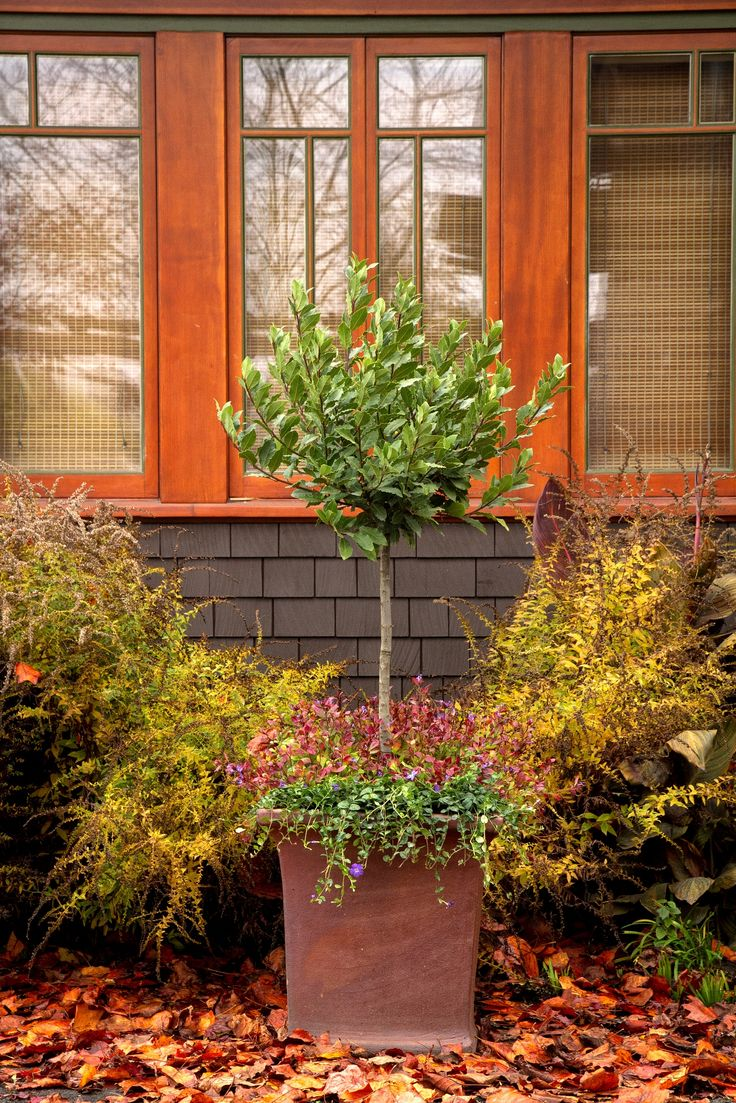 17 Best Images About Small Trees For Small Spaces On 400 x 300