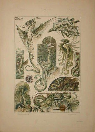 Art Nouveau Dragons by Anton Seder from Das Thier in der Decorativen Kunst, Vienna: 1896-1909, a sourcebook intended to provide inspiration for designers of fabrics, wallpaper, ceramics, book illustrations, posters and advertisements.