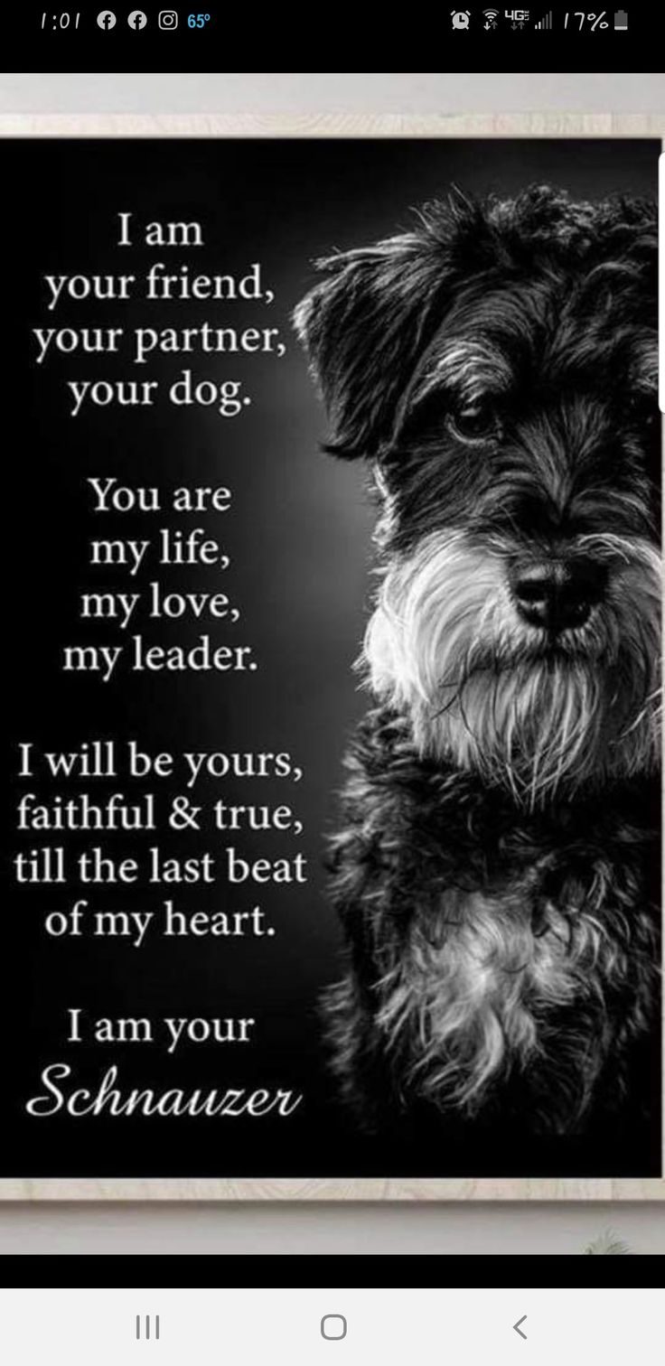 Pin by Elaine Hayward on Oliver in 2020 You are my life