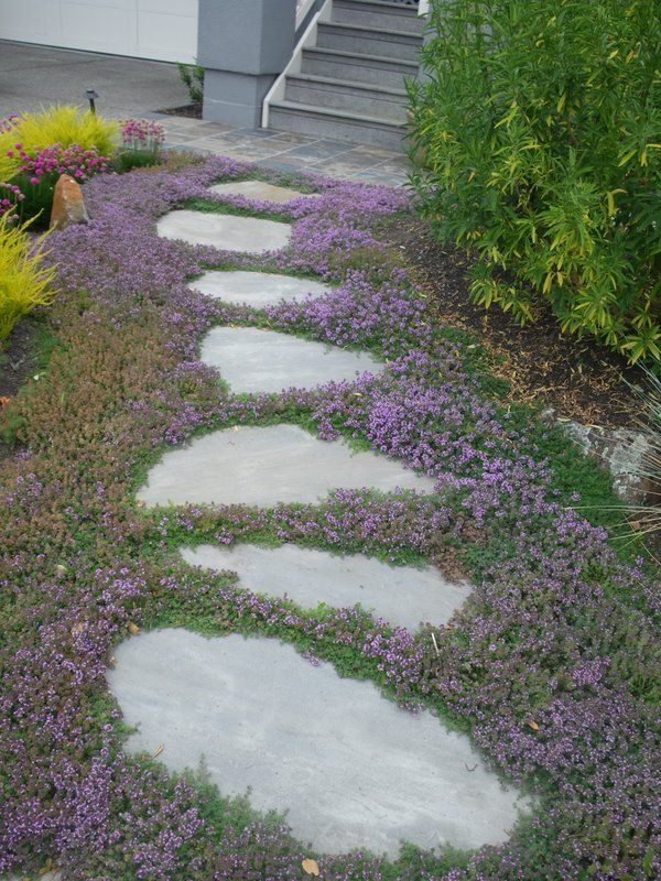 Stepping stones with creeping thyme - path to swing set. Big stones pretty close together.