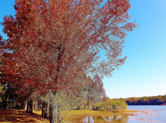 There's another reason you should pay a visit to this tiny town that isn't as well known as the others. Chipley is actually a great place to view stunning fall foliage.