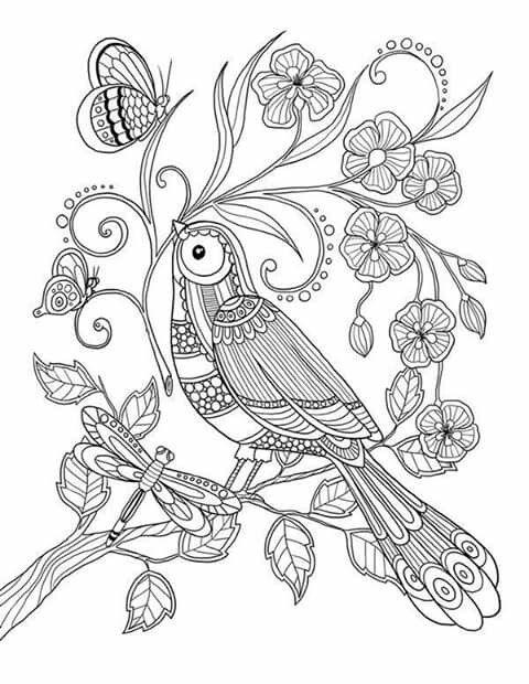 #coloring #paracolorir #bird