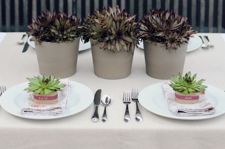 darling succulent tabletop