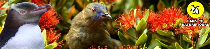 Back to Nature Tours - Otago Peninsula, Dunedin, New Zealand