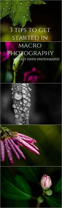 3 Tips to Get Started in Macro Photography | Aly Dawn Photography Macro tips