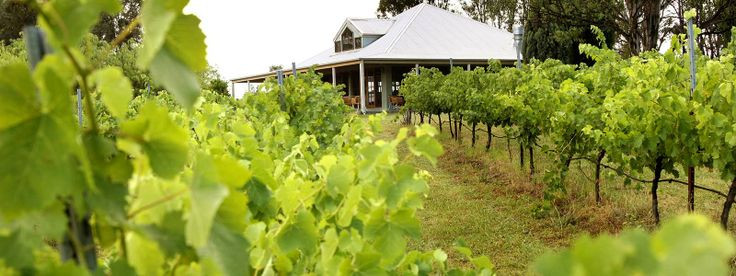 Spicers Vineyard Estate