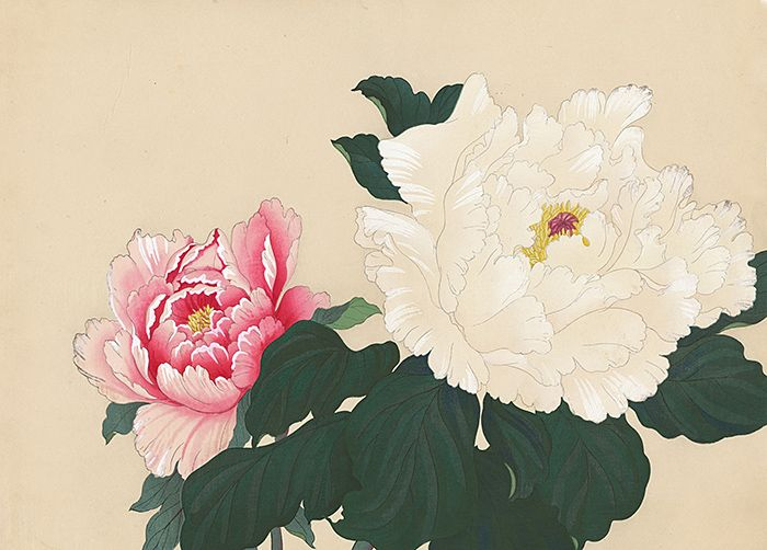 Image result for japanese art peony and jessamine