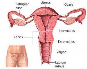 Obat Tradisional Untuk Mengobati Kanker Serviks   Pengobatan Kanker Mulut Rahim Yang Aman Alami Ampuh
