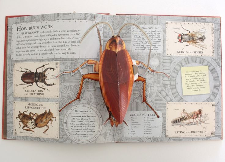 """A spread from the recently published """"Bugs"""" book"""