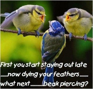 Haha!: Parents, The Real, Birds Of Paradis, Little Birds, Blue, Funny Animal, Angry Birds, Branches, Kid