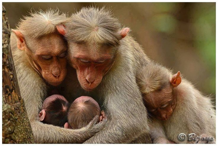monkey family, so tender