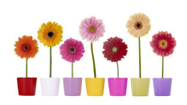 Come conservare i fiori per più tempo