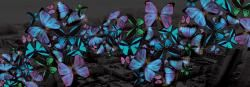 Color in Dark City, #Colorful #butterflies bring light, life and color to the nights of Dark City. #Design, #Scarf,  #fashion