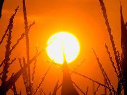 Summer sun. #seasonsforgrowth