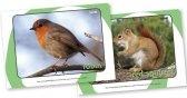 British Wildlife Display Photos