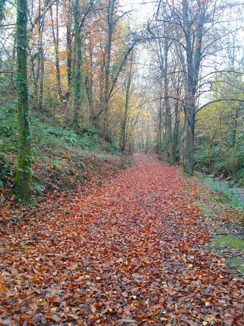 Alfombras de otoño