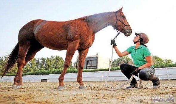 دانة القصيبي أول سعودية تعمل في ترويض الخيول حاملة أسمى معاني الإنسانية Animals Horses