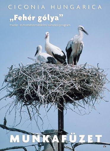 Ciconia Hungarica munkafüzet- Fehér gólya - Kiss Virág - Picasa Webalbumok