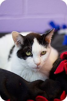 Click here to learn more about Luella - Permanent Foster