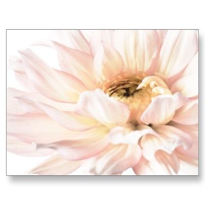 $0.83  Pink Dahlia Artwork - Customize Post Cards