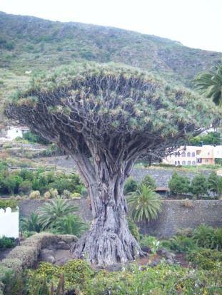 Pablo Excursions Tenerife