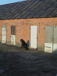 Gawęda jak nasze psy i koty: Borys i Czaruś w porannym słońcu