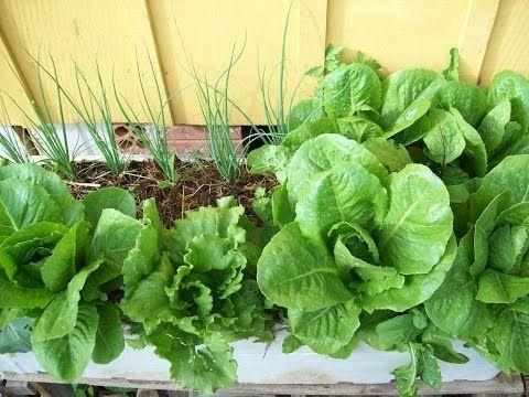 Como fazer horta organica em casa ou apartamento - YouTube