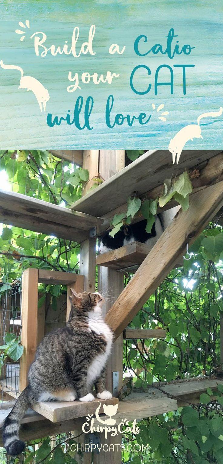 So Bauen Sie Ein Catio Das Ihre Katze Lieben Wird Die Verschmelzung Von Außen Und Innen Auße Outdoor Cats Outdoor Cat Enclosure Cat Playground Outdoor