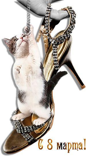 Поздравления с 8 марта. Прикольные картинки с 8 марта. Смешные кошки. 5