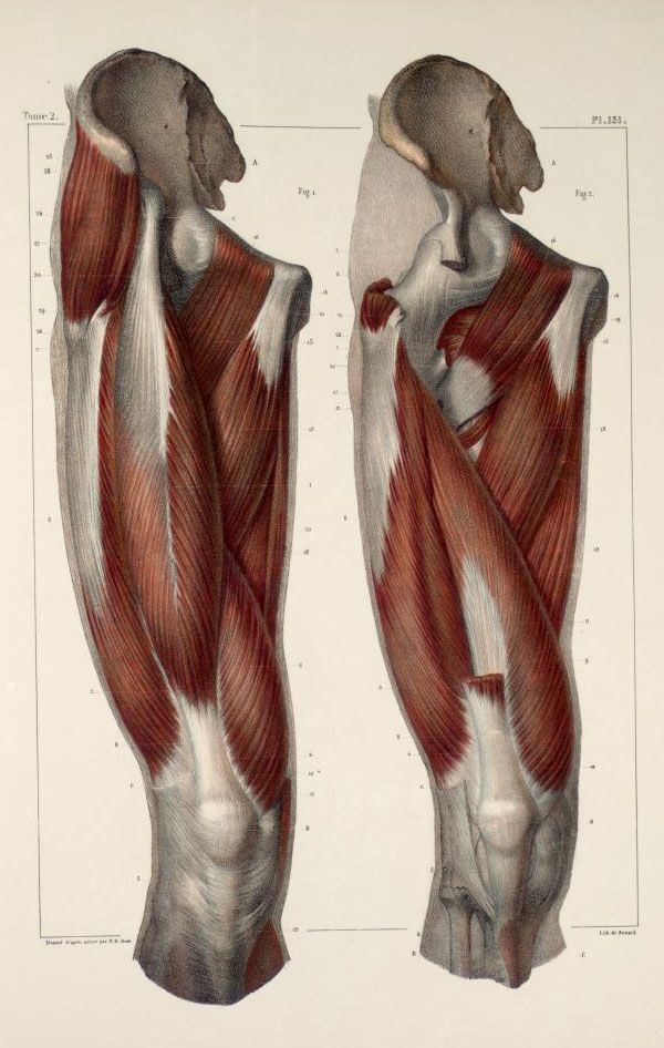 Traité complet de l'Anatomie de l'Homme.Vols. I- VIII, (Second edition, Paris, 1867–1871 https://pinterest.com/pin/287386019941966857/). Author: BOURGERY, Jean-Baptiste (1797-1849  https://pinterest.com/pin/287386019948321810). Artist: Nicolas Henri Jacob (1782-1871).