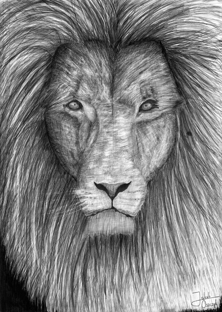 The work of lion, that ends the drawing year. Hope you enjoy :)