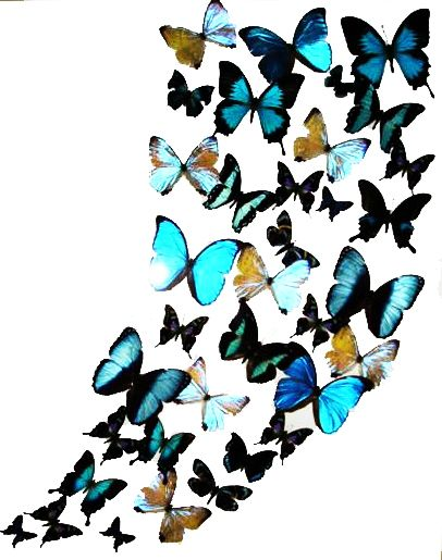 Native American Butterfly Symbol | Send eCard - Butterflies in full color 18