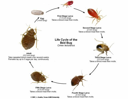 emerson villela carvalho jr md keep bedbugs out of your bags