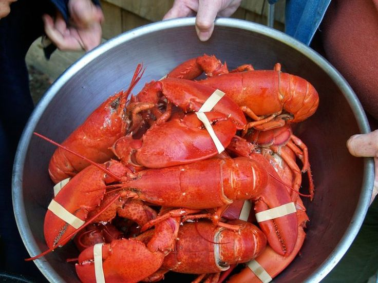 arthropod invertebrate animal person lobster food crustacean dungeness crab decapoda Seafood american lobster animal source foods seafood boil fish crab king crab produce crayfish