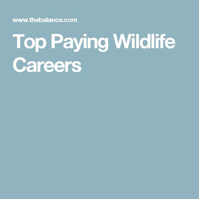 Best 25+ Marine biologist salary ideas on Pinterest Marine - sample wildlife biologist resume