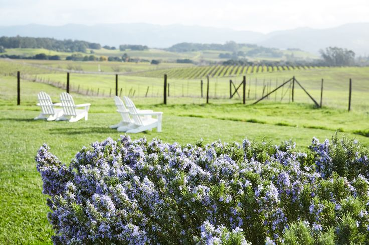 Blooming lavender, Adirondack chairs and rolling vineyards. Does it get any better than this?!