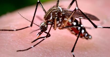 When I was coming to the Philippines the first time my local doctors said I needed about ten injections to protect me from risks in the Philippines. We had Malaria,Hep B and even yellow fever. But, what about the Dengue? Dengue is carried by s special type of mosquito and if you see it in a room