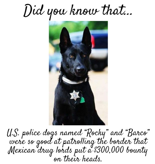 an interesting fact about #service #dogs