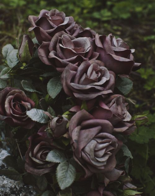 Not the prettiest picture of purple roses...but the smell is amazing and they make me :)