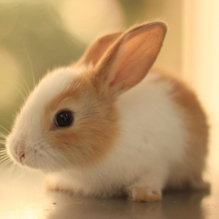 Cute Animal Pics (@CuteAnimalsBaby) | Twitter